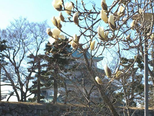 名古屋城と花.JPG